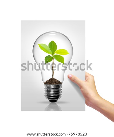 Light bulb with sprout inside picture white paper in girl hand on white background - stock photo