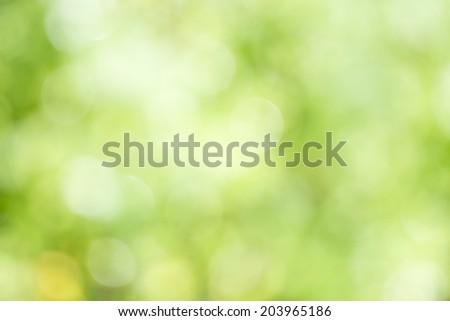 Light green background beautiful bokeh  - stock photo