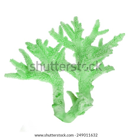 light green coral isolated on white background - stock photo