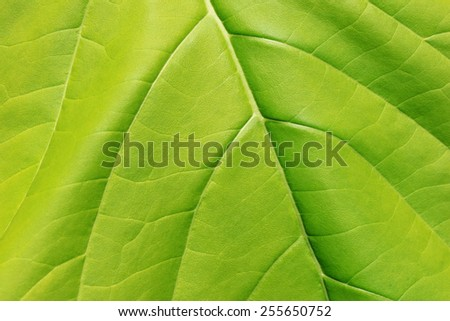 light green leaf texture - stock photo
