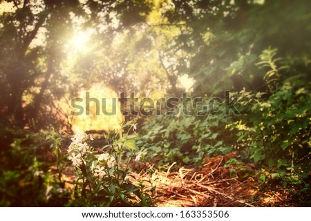 light in the forest - stock photo