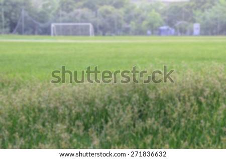 Light of grass blur - stock photo