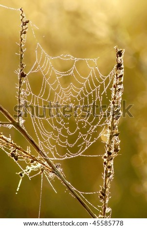 Light of the rising sun falls on spider web covered with morning dew. - stock photo