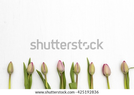 Light Pink Tulips - stock photo