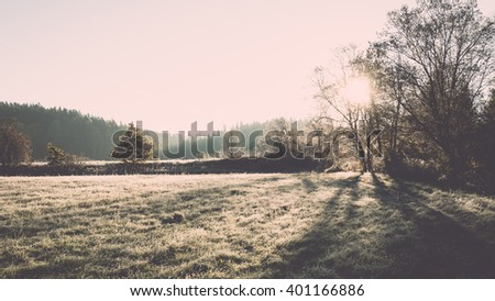 Light rays in forest in foggy morning in countryside - vintage film effect - stock photo