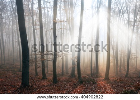 Light rays through the trees in magic forest - stock photo