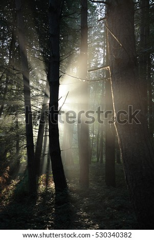Light rays through the woodland trees