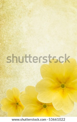 Light textured paper background with yellow primula flowers. Detailed canvas texture. Copy-space. - stock photo