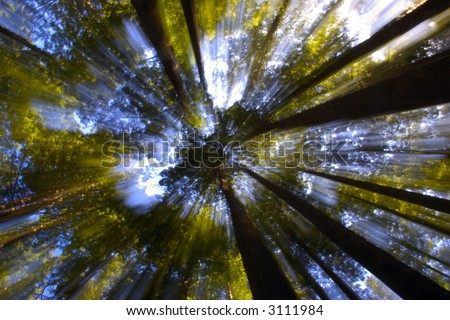 Light through the Forest Canopy - stock photo
