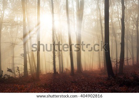 Light through the trees in foggy forest - stock photo