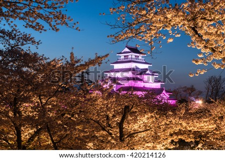 Light up at Tsuruga Castle (Aizu castle) surrounded by hundreds of sakura trees