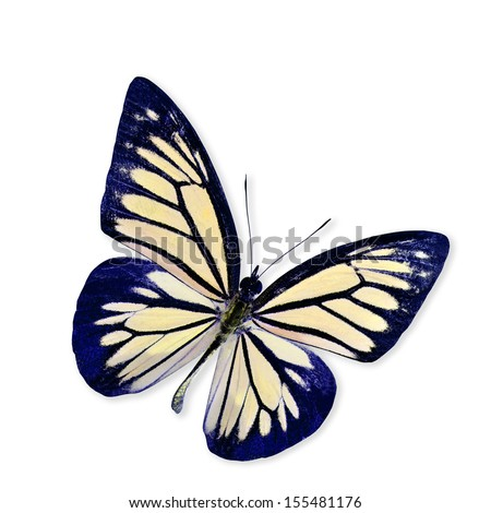 Light Yellow Butterfly Flying isolated on white background with soft shadow - stock photo