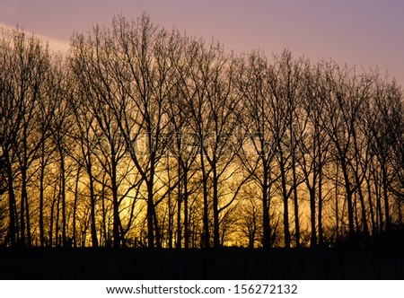 Lightening sky of dawn on New Year's Day, 2013, with trees silhouetted against skyline. - stock photo