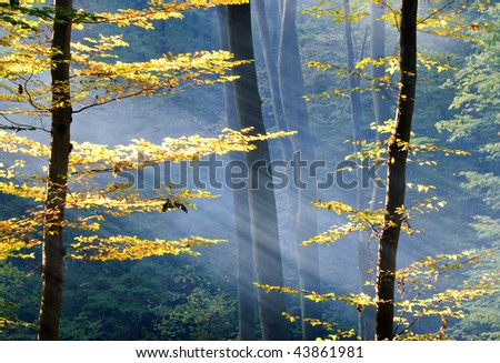 Lights of the autumn forest - stock photo