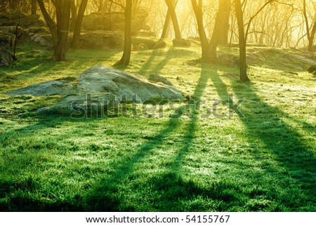 Lights of the morning forest - stock photo