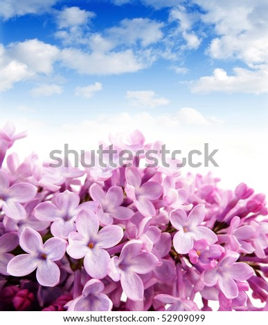 lilac and blue sky - stock photo
