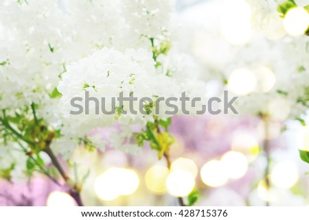Lilac blooming tree with white blooming flowers close up, retro toned - stock photo