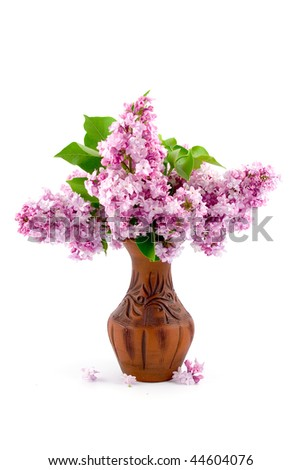Lilac bouquet isolated on white background
