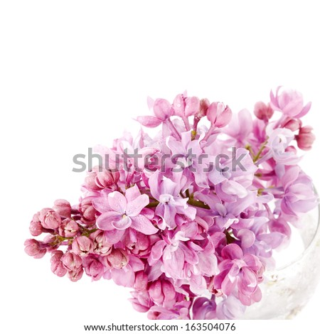Lilac branch in a glass. Lilac flowers. Lilac bouquet. - stock photo