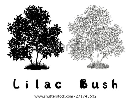 Lilac Bush with Leaves and Grass Black Silhouette, Contours and Inscriptions Isolated on White Background.  - stock photo