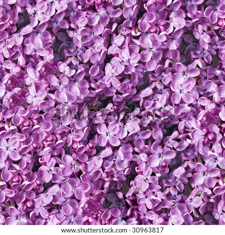 Lilac closeup seamless background. (See more seamless backgrounds in my portfolio). - stock photo
