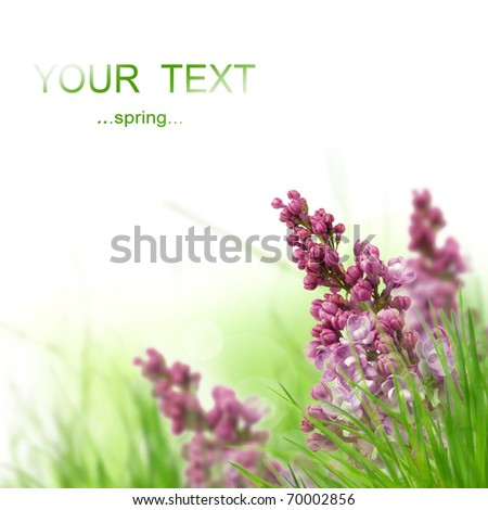 Lilac flower cluster - stock photo
