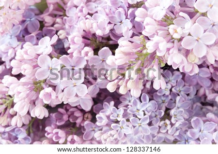 Lilac flowers background - stock photo