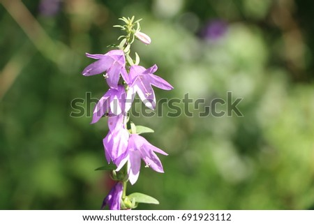 Lilac flowers bells on a bright sunny day