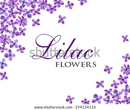lilac flowers frame isolated on white background, place for text - stock photo