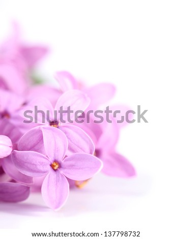 Lilac flowers isolated on white