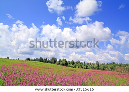 lilac flowers on field - stock photo