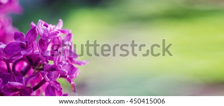 Lilac. Purple Lilac. Bouquet of purple lilacs. Beautiful flowers of lilac - close up. Toned Photo. Macro image of spring lilac violet flowers, abstract soft floral background. Copy space - stock photo