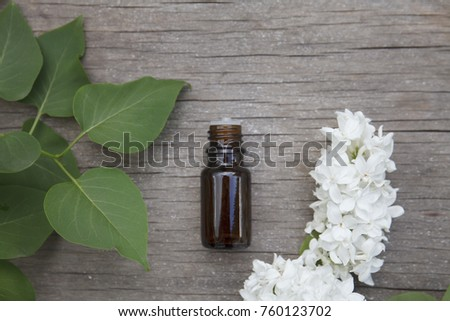 Lilac syringe essential oil extract infusion stock photo edit now lilac syringe essential oil extract infusion tincture with white flower blossoms mightylinksfo