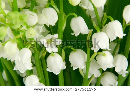 lilies-of-the-valley - stock photo