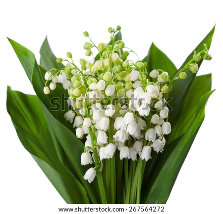 Lilies of the Valley with leaves isolated on a white background. - stock photo
