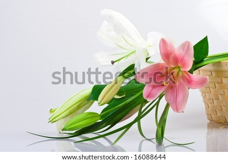 Lilium flowers - stock photo