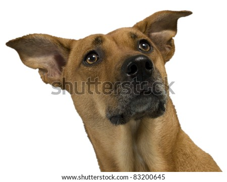Lilly the dog - stock photo
