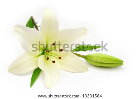 Lily - stock photo