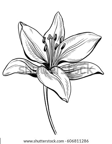110408628343712060 together with 355080751851082299 furthermore Lily flower moreover How To Draw Landscapes8 as well Massage Therapy. on cool garden design