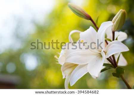 Lily Flowers border design.Spring Flowers  - stock photo
