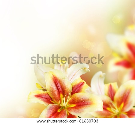 Lily Flowers border design.Summer Flowers - stock photo