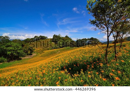 lily hill with beautiful cloudscape background - stock photo