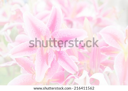 Lily in soft color for background