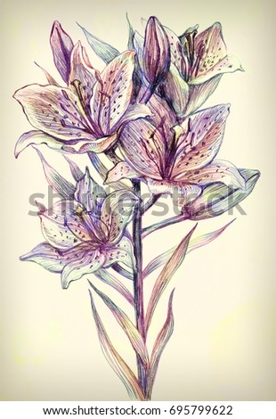Lily isolated on vintage background. Retro card with blooming lily. Hand drawn colorful pencil illustration.