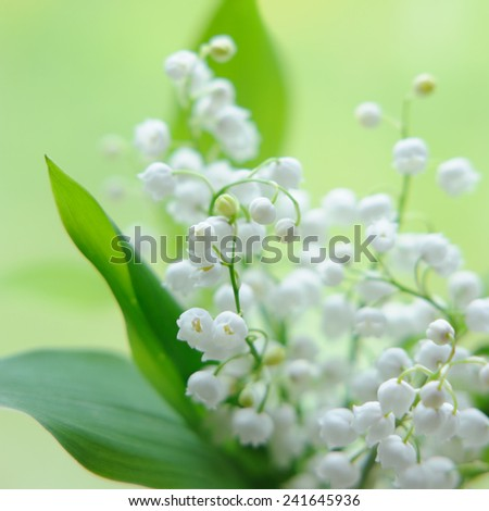 Lily of the valley bouquet in glass on natural background - stock photo