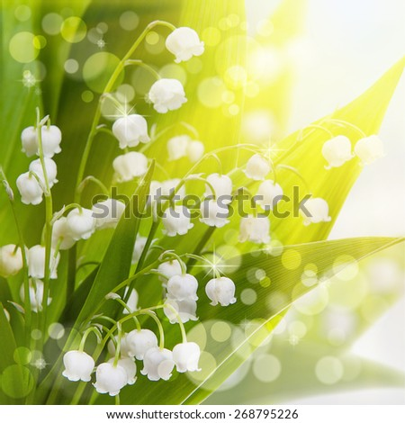 Lily-of-the-valley flovers and sunlight - stock photo