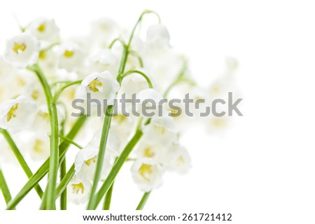 Lily of the valley flowers isolated on white background - stock photo