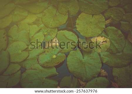 Lily Pad Background with Retro Instagram Style Filter - stock photo