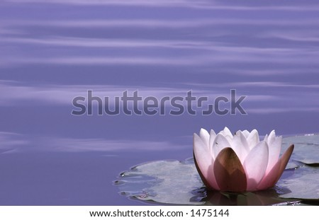 Lily Pond - stock photo