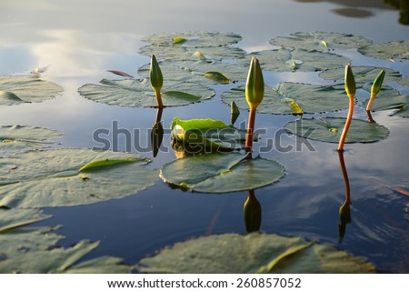 Lily pond in the Garden Route, South Africa - stock photo